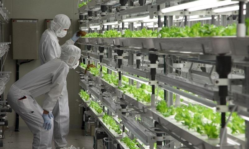 fujitsu-lettuce-farm