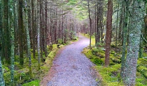 5. the path to the bog 5-30-15