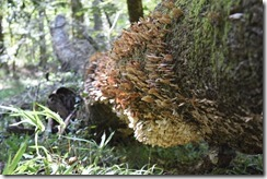 Tree with mushrooms-6