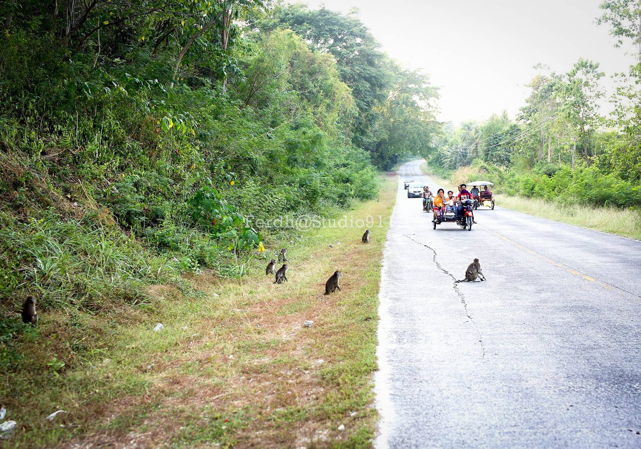 Image of Maguindanao wild monkeys beg for food in highway