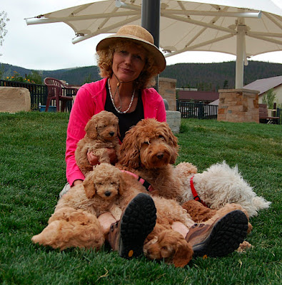GorgeousDoodles Breeder of   Labradoodles with La'Nore and puppies.