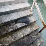 Descanso no cais - Isabela - Galápagos, Equador