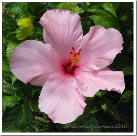 07-23-pink-hib