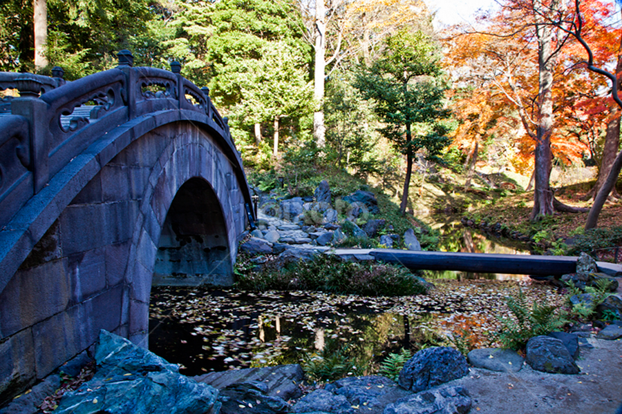 Koishikawa national park by Nyoman Sundra - City,  Street & Park  City Parks ( japan, autumn, beautiful, tokyo, koishikawa, garden )