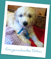 Gorgeousdoodles Dalton 2012