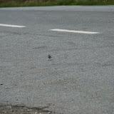 Een vogeltje op de weg.