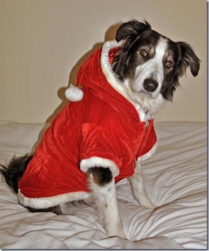 perro navidad (15)