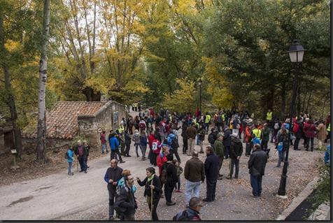020-VII Fiesta del Chopo Cabecero-Aliaga 2015