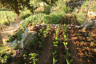 Eflatun-bahçe 099