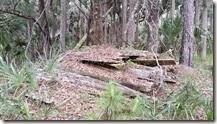 Old cedar planks