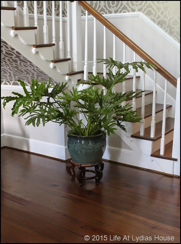 new plant and planter