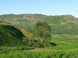 A lone tree from High Rigg.