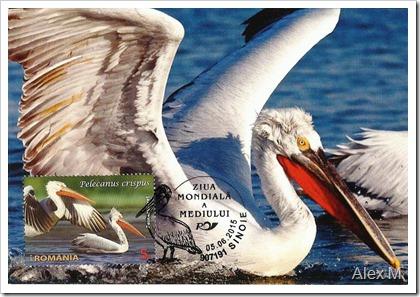 Pelicanul-cret-3