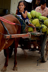 Świeża dostawa kokosów!