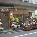 Japanese plant store in Shinjuku in Shinjuku, Tokyo, Japan