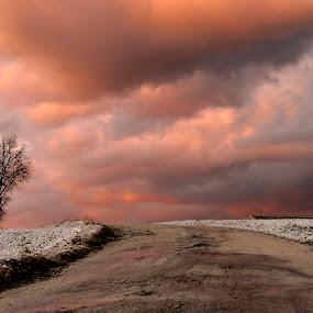 The tree in the storm by Mauro Fini - Uncategorized All Uncategorized