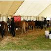 cattle19.jpg