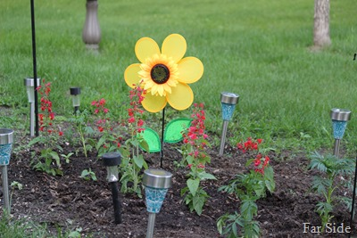 Solar Lights and flowers