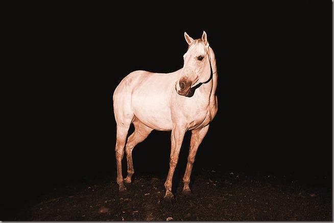 Wild-Horses-Photography6-900x600