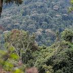 Der undurchdringliche Wald - Bwindi Impenetrable Forest © Foto: Marco Penzel | Outback Africa