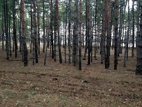 лес25.jpg