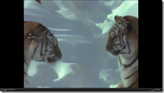 Tigers Snapshot