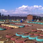 Haiti-Urban Agriculture- Jaden Tap Tap- 12/2011