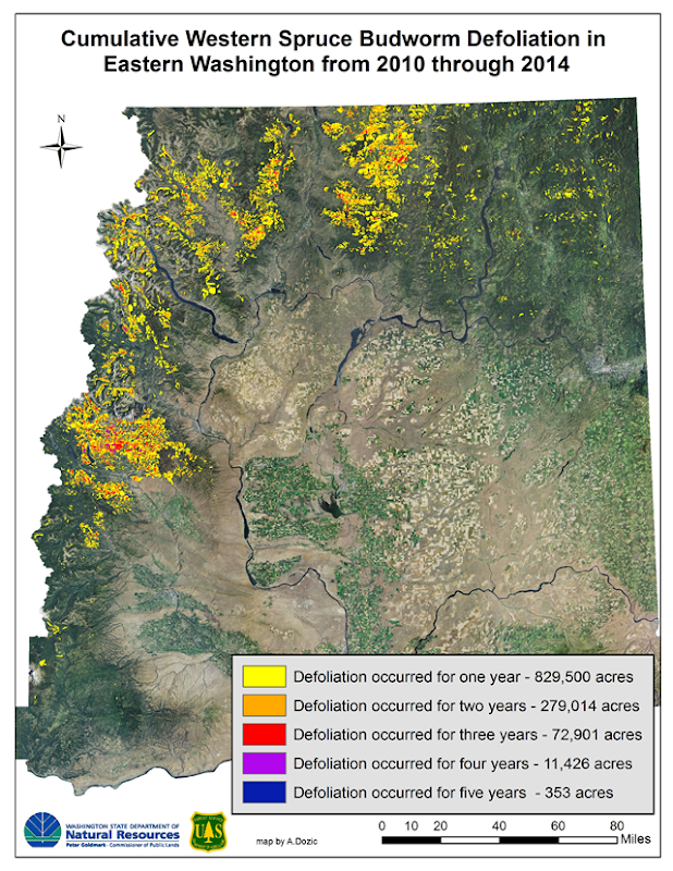 Cumulative western spruce budworm defoliation in Eastern Washington, 2010-2014. Graphic: Department of Natural Resources / U.S. Forest Service