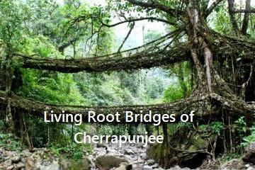 root-bridges