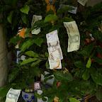 (a pieniądze rosły na drzewach)