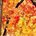 Autumn: What outerwear?