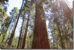 Sequoia National Park drive 4-028
