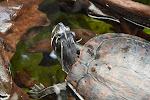 Carolina Aquarium - 06072013 - 19