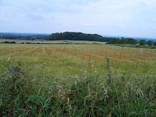 walk 29 am field at bottom of ridge.JPG