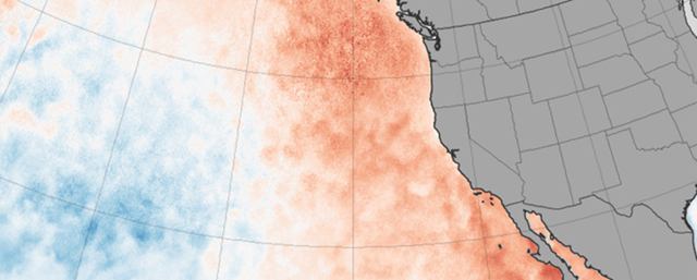 Sea surface temperature anomaly, March 2015. The data show an unusually warm pool of North Pacific Ocean water, sometimes referred to as 'the Blob', along the coast of North America. Graphic: Jesse Allen / NASA Earth Observatory