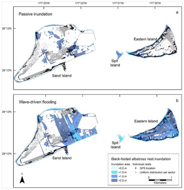 Projected inundation of black-footed albatross nests at Midway Atoll for four sea-level rise scenarios (+ 0.5, 1.0, 1.5, and 2.0 m) using passive (a) and wave-driven (b) models, including groundwater rise. Individual nest sites with GPS locations (± < 3 m accuracy) are indicated in black, approximate site locations of nests counted within census sectors are indicated in gray (assumes uniform distribution in suitable habitat; excludes infrastructure, shrubs and wetlands). Graphic: Reynolds, et al., 2015 / PLOS ONE