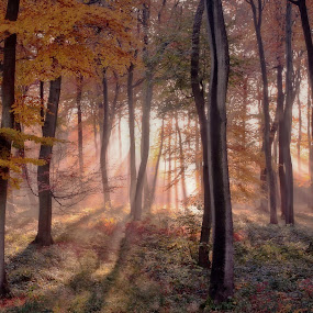 Autumn Sunrise by Ceri Jones - Landscapes Forests ( woodlands, season, autumn, fall, trees, forest, sunrise, woods, golden, #GARYFONGDRAMATICLIGHT, #WTFBOBDAVIS,  )