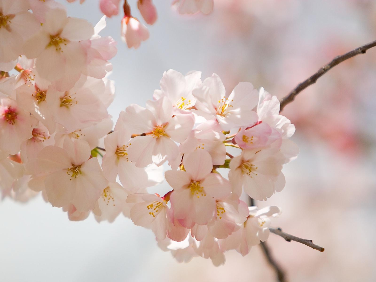 2 Spring Wedding Flowers