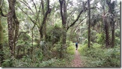 Jungle begins