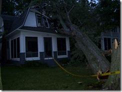 Tree down 2