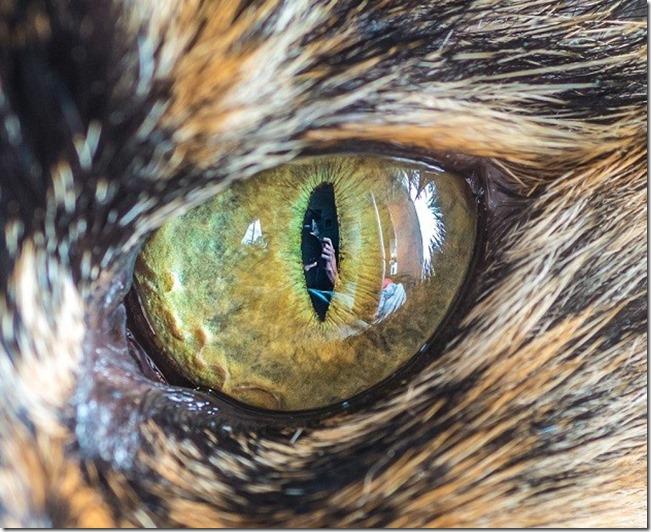 Cats Eyes8