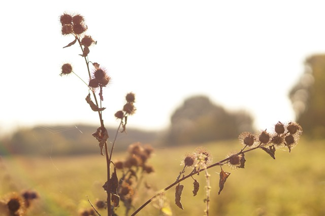 Norfolk countryside in autumn