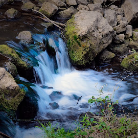 A little stream  by Bartos Claude - Landscapes Waterscapes ( water, stream, wildlife, beauty in nature, relaxing )