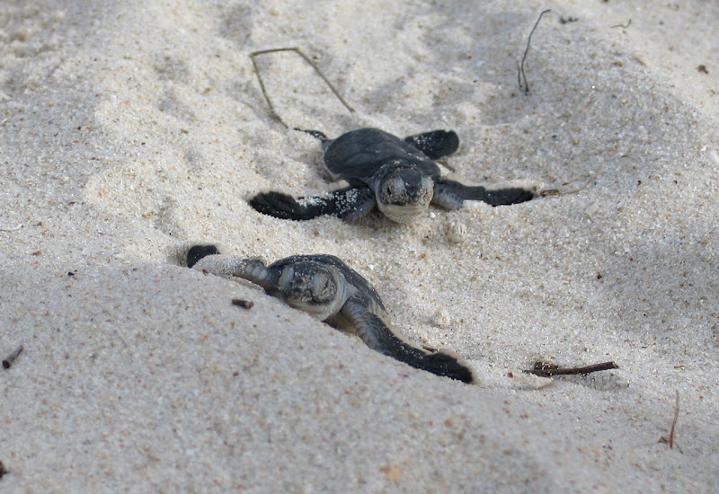 Auf Pirschfahrt - Meeresschildkröten | Outback Africa Erlebnisreisen