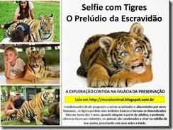 selfie-tigres_thumb[1]