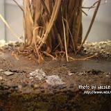 介紹板上寫著:「土」法煉金。早期金礦的發現全憑經驗,通常是經由砂金的淘洗,再溯源而上尋得礦脈。在九份、金瓜石一帶的溪流旁,芒草根部的砂土中常可發現砂金。