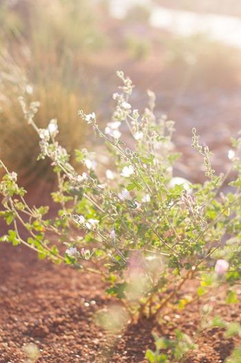 Red Hills Desert Garden (8)