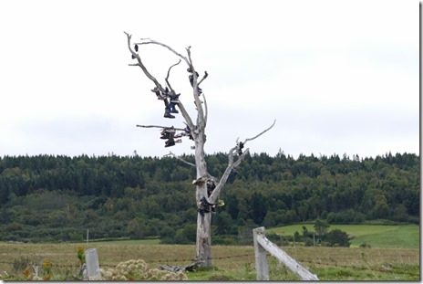 ca_nb_moncton_shoetree