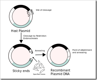 Recombinant formation of plasmids