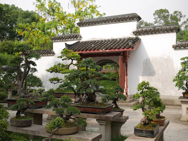 Tree penjing (bonsai) at Kaihua Isle in Fuzhou